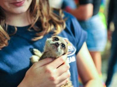animal rescue petting zoo